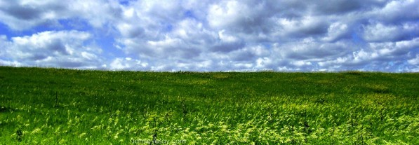 cropped-iowa-grass-sky-treated-large-wm-799-jamie-vesay-100_4200-copy.jpg