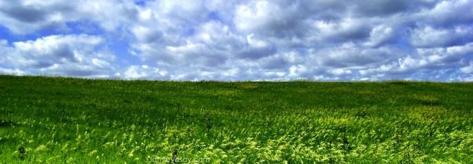 cropped-iowa-grass-sky-treated-large-wm-799-jamie-vesay-100_4200-copy.jpg