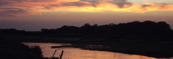 cropped-sunset-river-and-heron-jamie-vesay-dscf3275.jpg