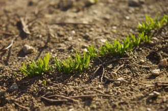 Baby grass Jamie Vesay 2WM TRD IMG_7312 - Version 2